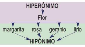 Hiperonimia e hiponimia